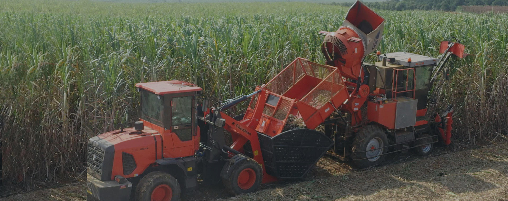 Chenhan Sugarcane Harvesting Mechanization